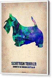 Scottish Terrier Poster Acrylic Print