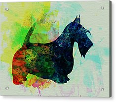 Scottish Terrier Watercolor Acrylic Print