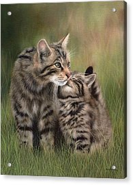 Scottish Wildcats Painting - In Support Of The Scottish Wildcat Haven Project Acrylic Print