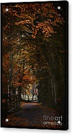 Acrylic Print featuring the photograph Scottish Woodland Walk by Liz  Alderdice