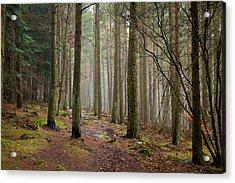 Scottish Woods Acrylic Print