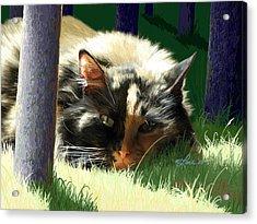Scout In The Sun Closeup Acrylic Print