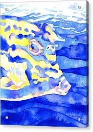 Scrawled Cowfish Portrait Acrylic Print