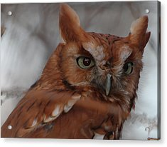 Acrylic Print featuring the photograph Screech Owl by Constantine Gregory