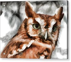 Acrylic Print featuring the photograph Screech Owl Photo Art by Constantine Gregory