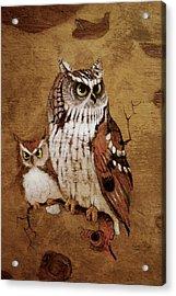Screech Owls Acrylic Print by Richard Hinger