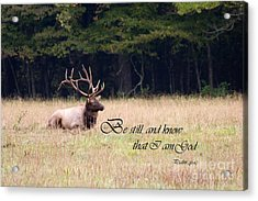 Scripture Photo With Elk Sitting Acrylic Print