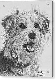 Scruffy Terrier Dog Drawing Acrylic Print