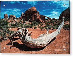 Sculpture Wilderness Landscape Acrylic Print by Kim Lessel