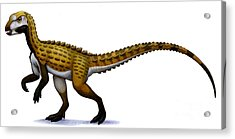 Scutellosaurus, An Early Jurassic Acrylic Print by H. Kyoht Luterman