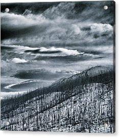 Roam Free Acrylic Print by Priska Wettstein