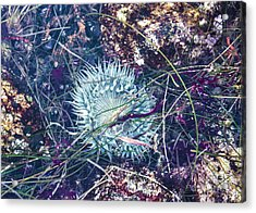 Sea Anenome - Terrestrial Flower Acrylic Print by Terry Rowe