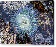 Acrylic Print featuring the mixed media Sea Anenome by Terry Rowe