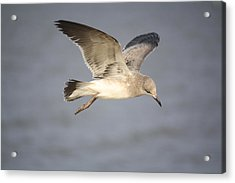Sea Bird Acrylic Print