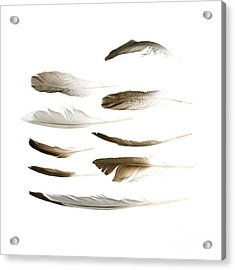 Sea Bird Feathers Acrylic Print
