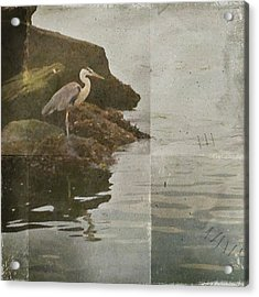 Acrylic Print featuring the photograph Sea Bird by Kevin Bergen