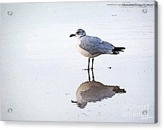 Acrylic Print featuring the photograph Sea Birds No.1 by Melissa Sherbon