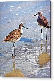 Acrylic Print featuring the photograph Sea Birds No.4 by Melissa Sherbon