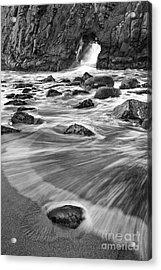 Sea Fan Acrylic Print by Michele Steffey