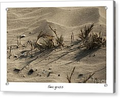 Sea Grass Acrylic Print by Artist and Photographer Laura Wrede