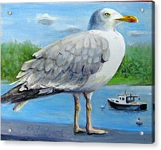 Acrylic Print featuring the painting Sea Gull On Alert by Oz Freedgood