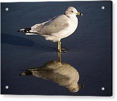 Sea Gull Reflection Acrylic Print by Paulette Thomas