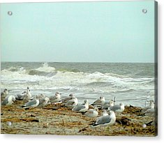 Sea Gulls In Windy Surf Acrylic Print by Cindy Croal