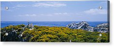 Sea Gulls Perching On Rocks, Point Acrylic Print by Panoramic Images