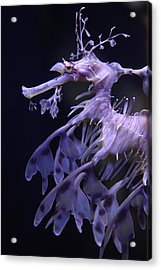 Sea Horse Acrylic Print by Donna Corless
