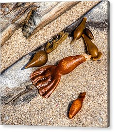 Sea Jewels Acrylic Print by Peter Tellone