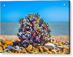 Acrylic Print featuring the photograph Sea Kale. by Gary Gillette