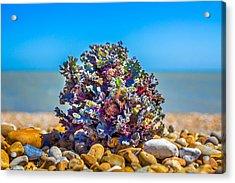 Sea Kale. Acrylic Print