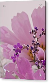 Acrylic Print featuring the photograph Sea Lavender Macro  by Sandra Foster