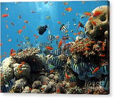 Sea Life Acrylic Print by Boon Mee