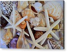 Sea Life Menagerie Acrylic Print