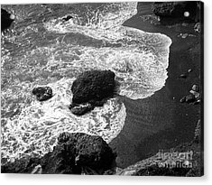 Sea Lion Cove Acrylic Print