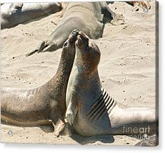 Sea Lion Love From The Book My Ocean Acrylic Print by Artist and Photographer Laura Wrede