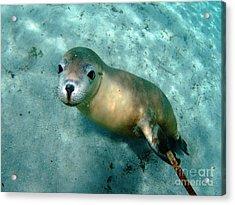 Sea Lion On The Seafloor Acrylic Print by Crystal Beckmann