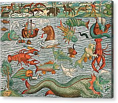 Sea Monsters 1544 Acrylic Print by Photo Researchers