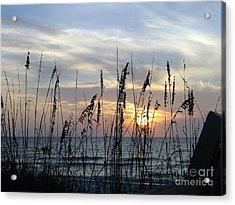 Acrylic Print featuring the photograph Sea Oak Sunset by Shelia Kempf