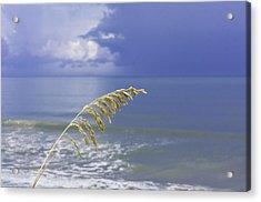 Sea Oats Ahead Of The Storm Acrylic Print by Karen Stephenson