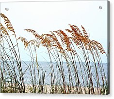Sea Oats And Serenity Acrylic Print by Cindy Croal