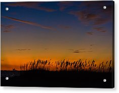 Sea Oats At Twilight Acrylic Print