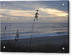 Sea Oats Acrylic Print by Dan Williams