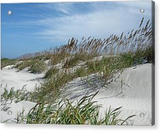 Acrylic Print featuring the photograph Sea Oats by Ellen Tully