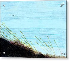 Acrylic Print featuring the drawing Sea Oats In The Wind Drawing by D Hackett