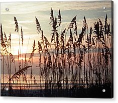 Fabulous Blue Sea Oats Sunrise Acrylic Print by Belinda Lee