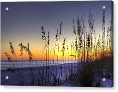 Sea Oats Acrylic Print