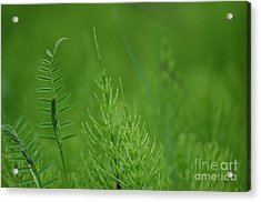 Acrylic Print featuring the photograph Sea Of Green by Bianca Nadeau