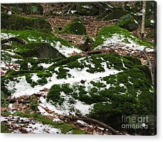 Sea Of Green Acrylic Print by Michael Krek